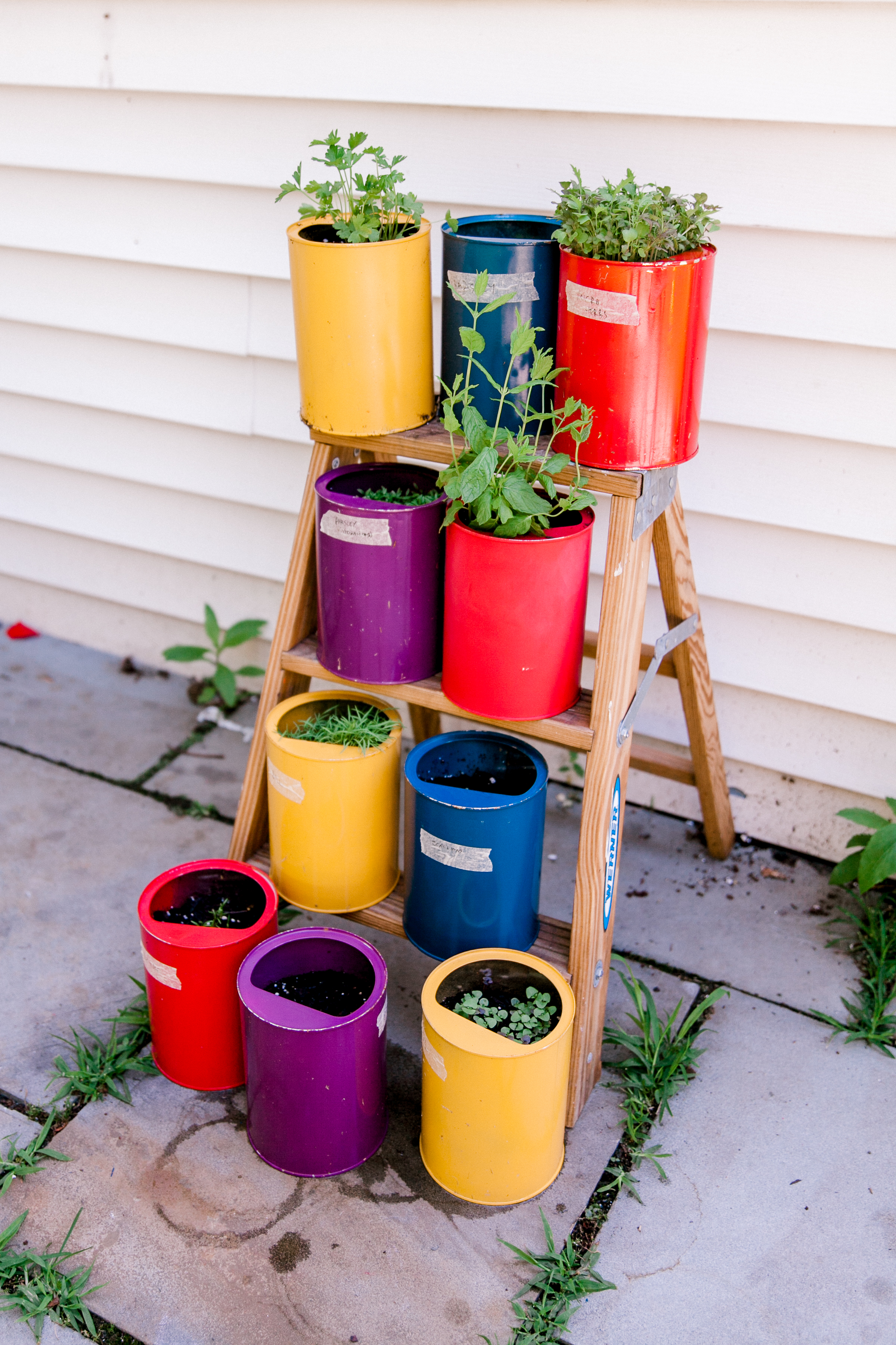 herb garden from formula cans